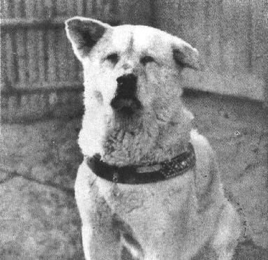 Hachiko, el perro fiel (Hachi: A Dog's Tale, 2009)