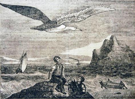 AlbatrozDibujo1837